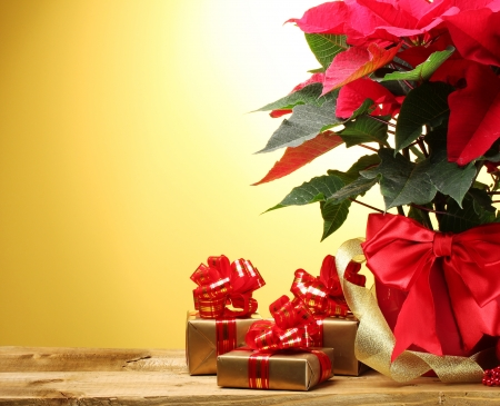 beautiful poinsettia in flowerpot, gifts and ribbon on wooden table on yellow background