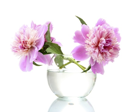 Photo for pink peonies flowers in vase isolated on white - Royalty Free Image