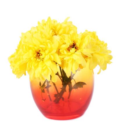 Beautiful chrysanthemum flowers in vase isolated on white