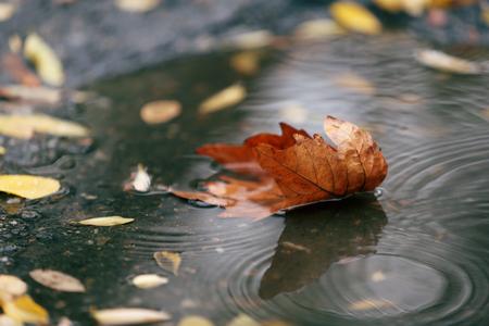 Autumn leaf in puddle