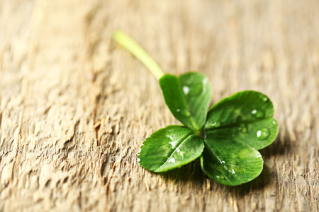Green clover leaf with drops on wooden background