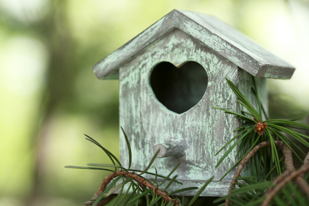 Photo pour Decorative nesting box on branch, on green background - image libre de droit
