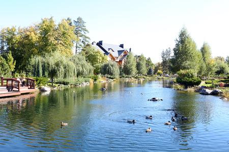 Lake in Summer park