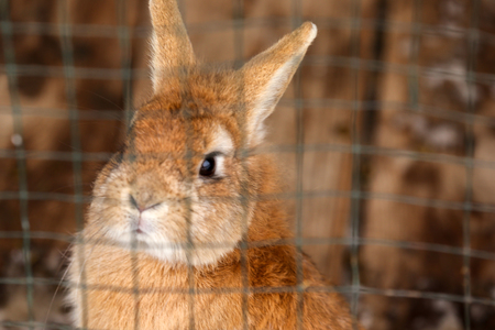 Cute funny rabbit in cage
