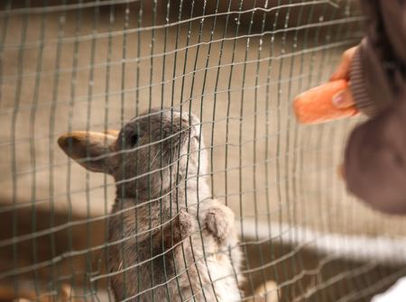 Woman feeding cute rabbit with carrot, closeup