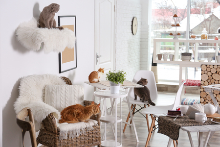 Photo pour Beautiful interior of modern cat cafe - image libre de droit