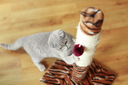 Photo for Cute cat sharpening claws on scratching post - Royalty Free Image