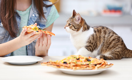 Photo pour Young woman and cute cat eating tasty pizza in kitchen - image libre de droit