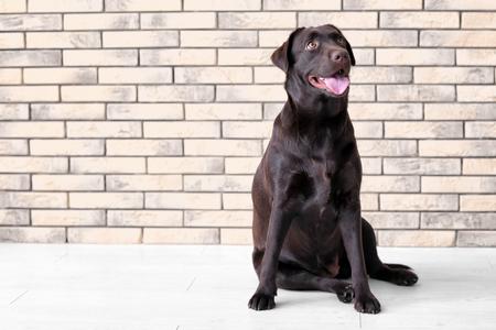 Foto de Cute funny dog against brick wall - Imagen libre de derechos