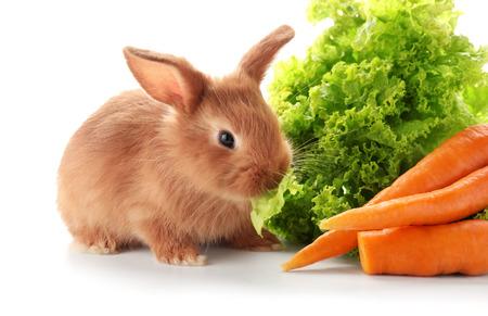 Foto de Cute fluffy bunny with lettuce and carrots on white background - Imagen libre de derechos