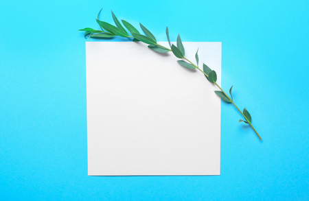 Branch of tropical plant and blank card on color background