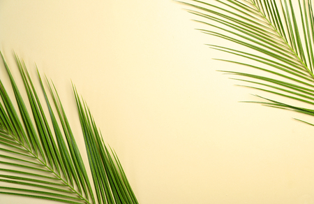 Fresh tropical palm leaves on light background