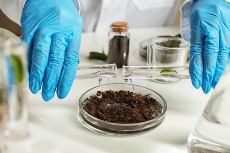 Photo pour Scientist pouring water into petri dish with soil in laboratory - image libre de droit