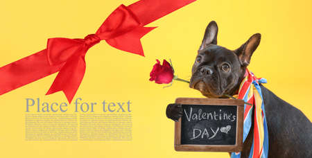 Beautiful greeting card with funny dog for Valentine\'s Day celebration