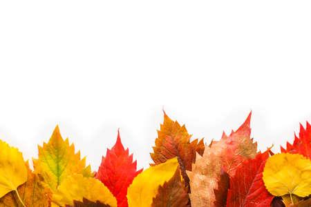 Photo pour Beautiful autumn leaves on white background - image libre de droit