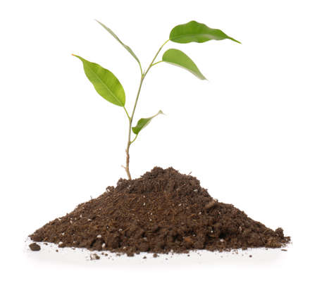 Photo pour Green plant with heap of soil on white background - image libre de droit