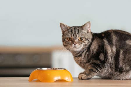 Photo pour Cute cat near bowl with food on kitchen table - image libre de droit