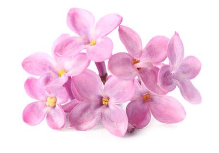 Photo pour Beautiful lilac flowers on white background - image libre de droit