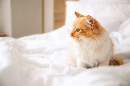 Photo pour Cute cat sitting on bed at home - image libre de droit