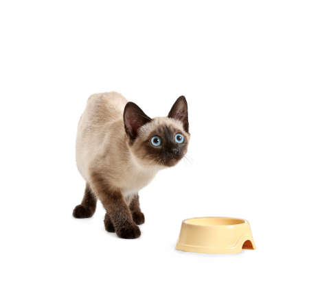 Photo pour Cute Thai cat and bowl with food on white background - image libre de droit