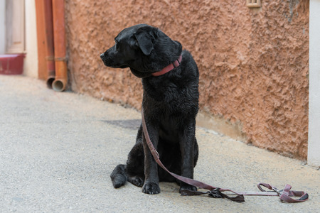 Sad black dog is looking for his lost master on a city street