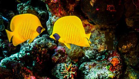 Photo pour The world of Red Sea reefs - image libre de droit