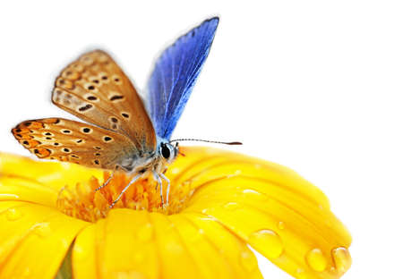 Photo pour butterfly on flower isolated on white background                                     - image libre de droit