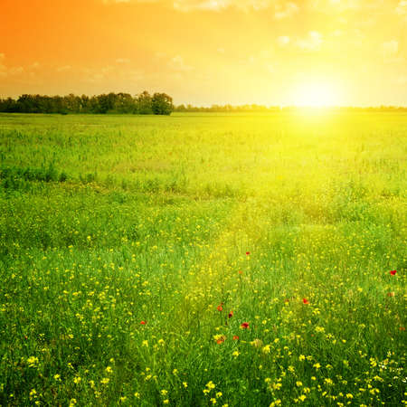 Photo for Beautiful sunset on a spring field                                     - Royalty Free Image