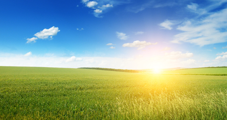 Photo pour Beautiful sunset on green field - image libre de droit