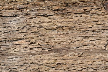 Foto de bark old tree. wood texture - Imagen libre de derechos