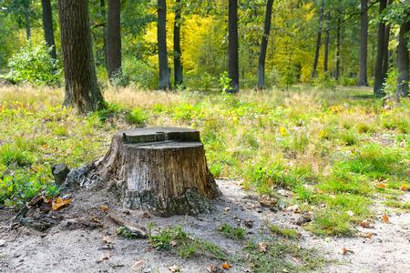 Foto de Stump from felled tree in forest with moss and green grass around. - Imagen libre de derechos