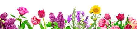 Photo for Panorama different flowers isolated on white background - Royalty Free Image