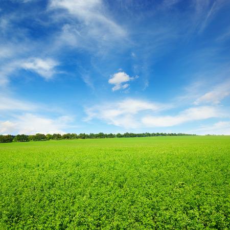 Photo pour Fresh spring clover field and blue sky - image libre de droit
