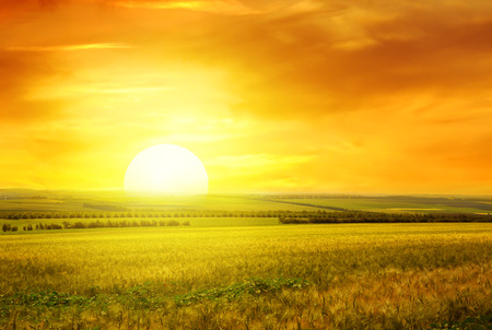 Foto de Golden sunset over wheat field - Imagen libre de derechos