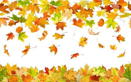 Seamless pattern of falling autumn leaves, on white background.