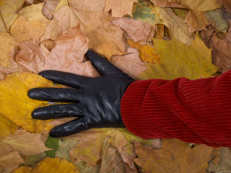 Female hand in a glove against yellow autumn leaves