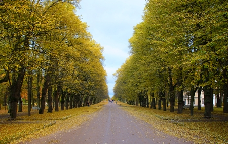 Autumn Evening and Triple Lime Alley in Pavlovsk Park