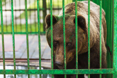 Photo for Bear in a cage with a painted face. Concept on the topic of abuse of animals - Royalty Free Image