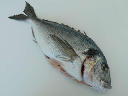 Photo pour fresh dorado on the table, ready to cook. healthy eating. fresh fish - image libre de droit