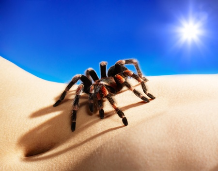 bodyscape with spider under blue sky and sun