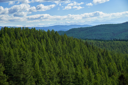 Foto per Altai mountains forest landscape in Ulagan Highlands. Siberia, Russia - Immagine Royalty Free