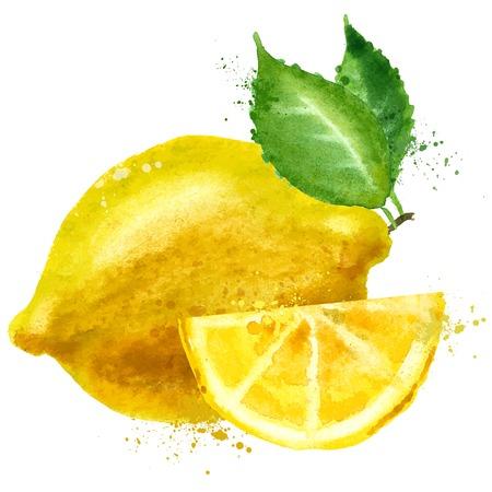 watercolor. lemon on a white background. vector illustrationの素材 [FY31036422526]