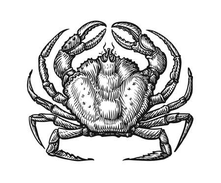 Illustration for Crab with claws sketch illustration in vintage engraving style. Seafood hand drawn vector - Royalty Free Image