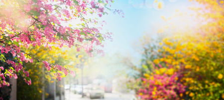 Photo for Beautiful colorful spring flowers on a background of the sun-drenched city streets, banner - Royalty Free Image