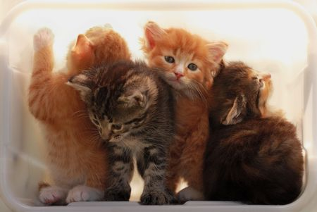 Kittens try to get out of a light box