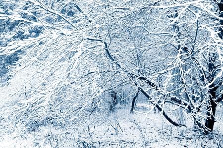 Photo pour Winter forest. Snow covered trees. Tint blue - image libre de droit