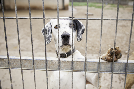 Abandoned dog and caged animal abuse and neglect