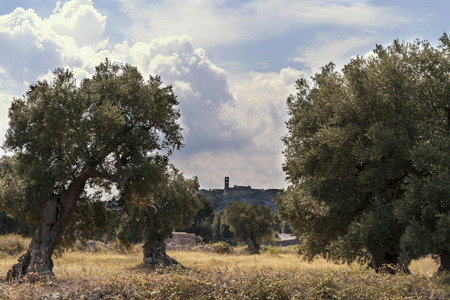Countryside near the medieval white village of Ostuni