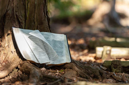 Foto de Holy Bible outdoors on tree trunk with pages turning in wind and sunlight. Blurred background with copy space. - Imagen libre de derechos