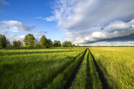 Photo pour Road in the field among green grass and beautiful sky in the evening - image libre de droit